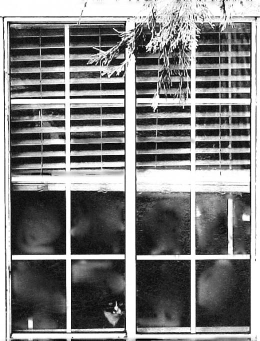 """Haunted Window..."""