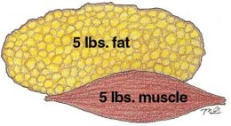 If you wonder why building muscles may make you look smaller, but the scale doesn't move - take a look and see the difference in size!
