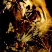 gauravamberkar profile image