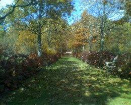 Lane of trees in Autumn at Tower Hill Botanic Garden in Boylston, MA