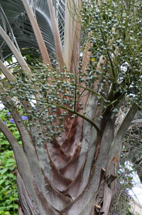 Photo 3 - So many interesting trees, shrubs and plants!