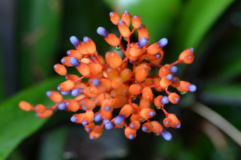 Photo 1 - Orange and Purple Bulbous flower