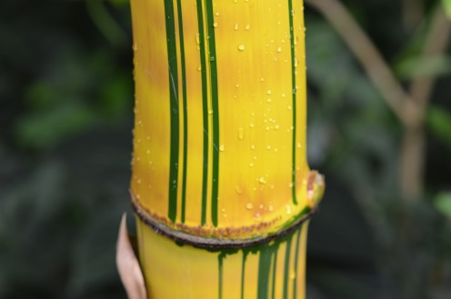 Photo 9  - Bold yellow and green colors on what looks like large bamboo.