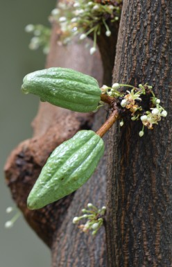 Photo 6 - I really loved seeing these pods! Nature is so amazing.