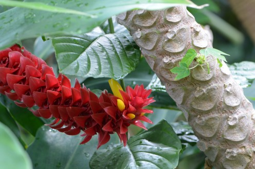 Photo 1 - Tropical red flower, with a unique set of branches, or trunk.  Look at the pattern on it!
