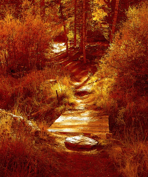 A deep golden filter provided warmth to this autumn trail scene, taken in lovely Big Bear, Ca.