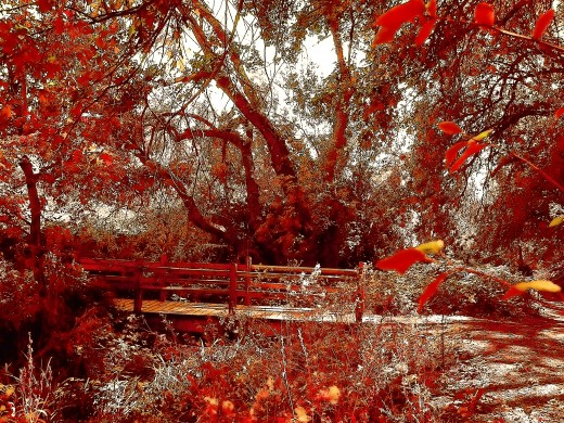 a nature trail in Oak Glen, Ca., becomes enflamed with color, thanks to Topaz Labs..