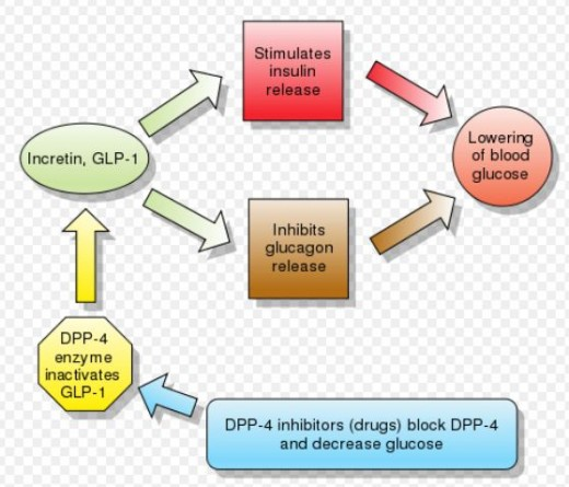 The Incretin System for Lowering Blood Sugar