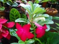 Balcony Gardening - Balcony Garden Ideas