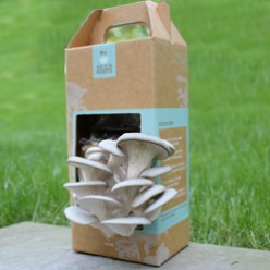 Organic Mushroom Growing Kits - The Back To The Roots Pearl Mushroom Kit.  Grow Your Own Organic Mushrooms