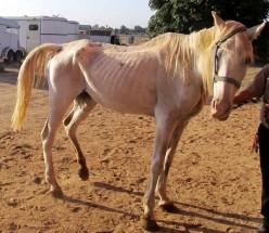Animal Neglect and Welfare!