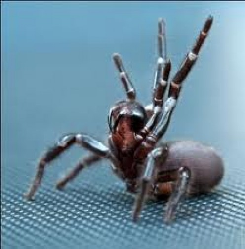 Sydney Funnel Web Spider