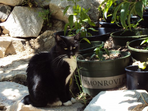 Annie cat is soaking up the garden sun, and dressed for the event in her tuxedo.