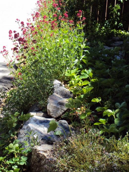 A garden sceine.