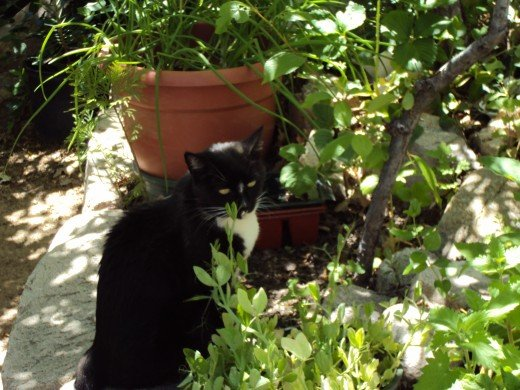 Annie cat among the plants.