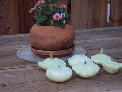 The patty pan squash are all lined up.