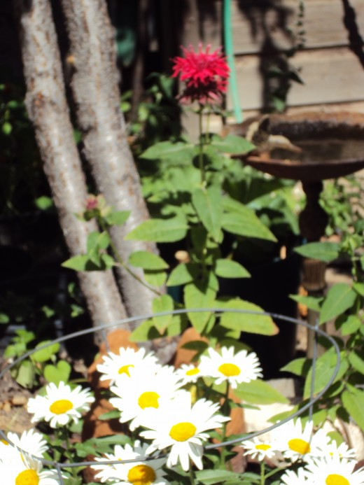 The bright red flower and the daisies in the bottom portion of the photograph are a beautiful contrast.