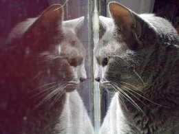 Who is that cat in the mirror?