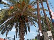 Palm trees :)