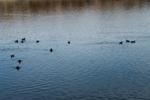 Small birds on the lake