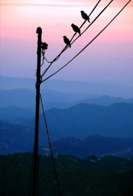 The picture of the sunset Carl took , here are the three birds.