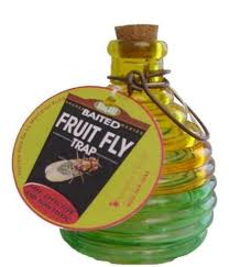 How to get rid of fruit flies with Springstar