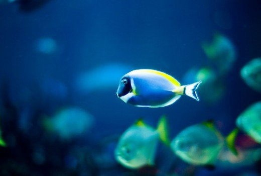 The Meaning of Fish in Dreams | Exemplore