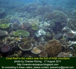 coral reef in Dorey bay of Manokwari - West Papua province of Indonesia