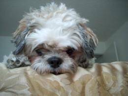 My mom's dog Cherokee