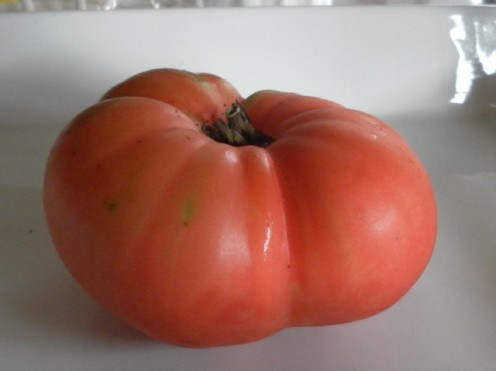 Ponderosa tomato. Most huge tomatoes tend to get deformed as they grow bigger.