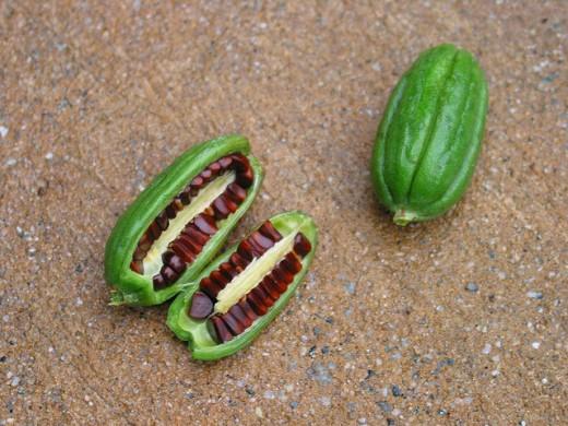 Seeds in fruit.