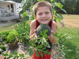 Growing watermelons...so easy a kid can do it!