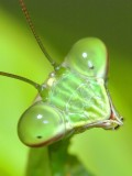 53 Macrophotography / Microphotography Images of Insects Plus Video