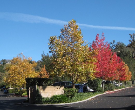 This was taken in a parking lot in Atascadero.