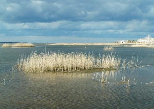 Prime Hook National Wildlife Refuge Wetland.