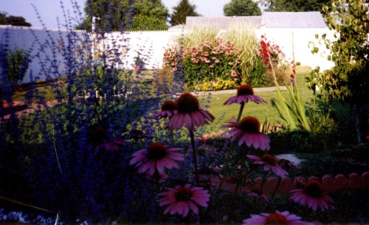 Coneflower and Russian Sage