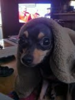 Assassin's Creed Dog