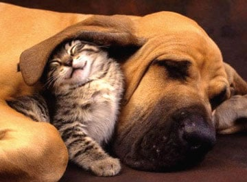 A dog and a cat being friends