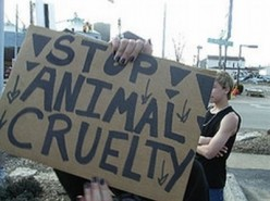 The Crime and Punishment of Animal Abuse