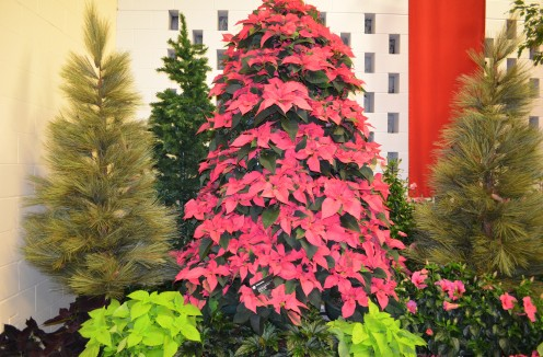 A poinsettia Christmas Tree