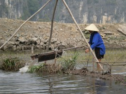 Vietnamese peasant working his rice paddies. Tam Coc, Vietnam.