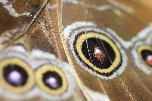 The underside of a butterfly wing is not as vibrantly colored as the top side.