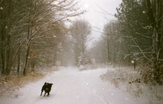 Home sweet snowy home . . . my dog Fred romping in the snow at Moccasin Lake, Christmas 1994
