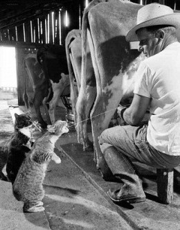 The Personal Assistant:  Helping in the Barn