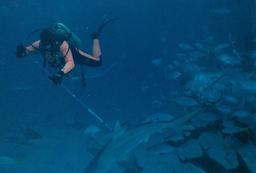 Gary Adkison Tagging Sharks for Research