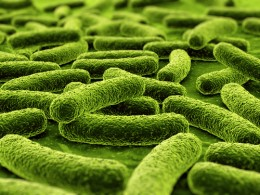 Germs. This is what the screen of your phone may look like under a microscope.