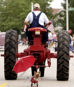One of the CUTEST pictures ever! A farmer working being followed by his faithful companion... awwwwww!!
