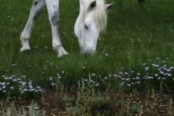 Horse Nutrition Basics