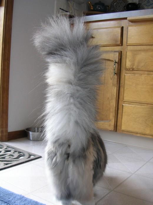 Big tail!!