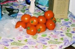 Twelve tomatoes